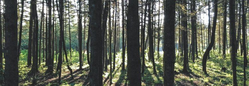 Säker trädfällning i Norrtälje