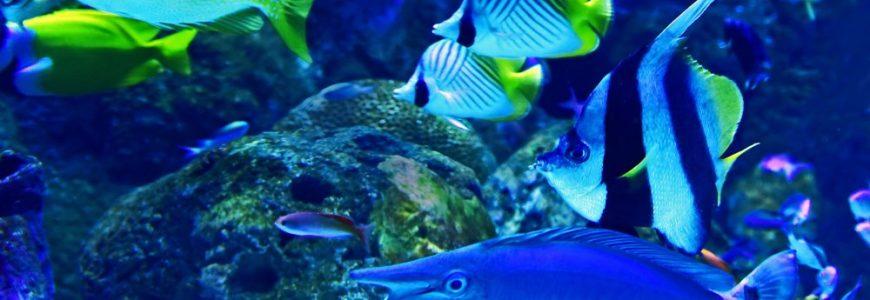 Fixa lyxsvit till fiskarna med rätt akvarietillbehör